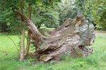 Bäume Iv_ 1